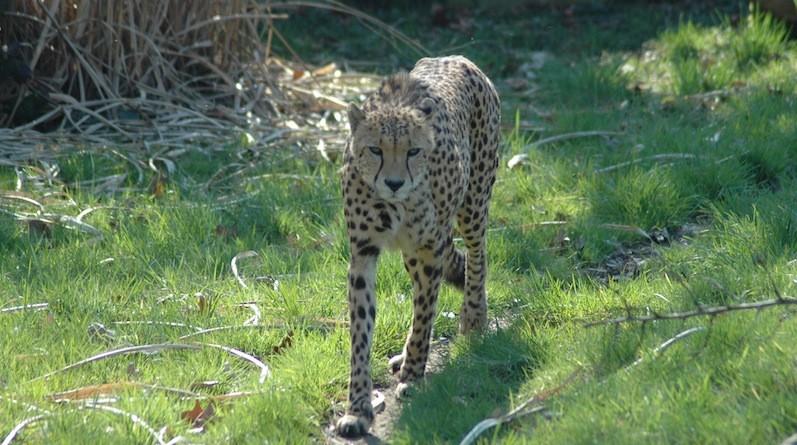 Psychopharmaka für Zoo Tiere?