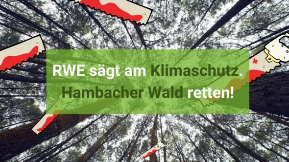 Rodung Hambacher Wald trotz geplantem Kohleausstieg