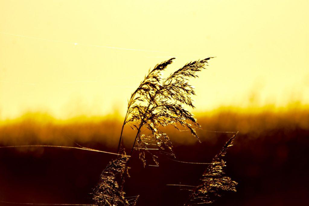 Sonnenuntergang Loquard Ostfriesland
