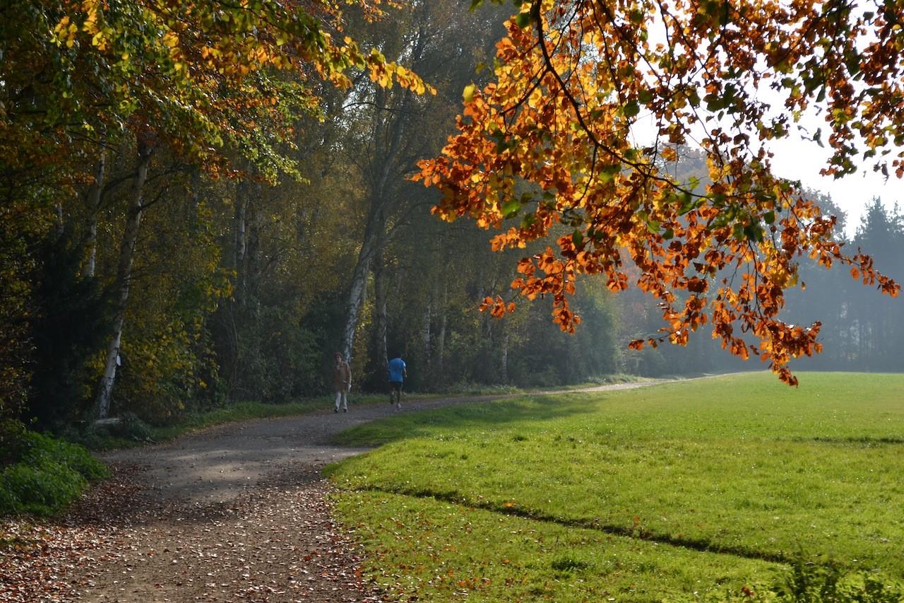 Herbstwald Köln Weiß Rheinbogen Kölner Süden