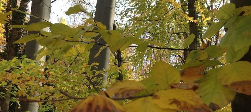 Wald in Köln hat keinen Wert