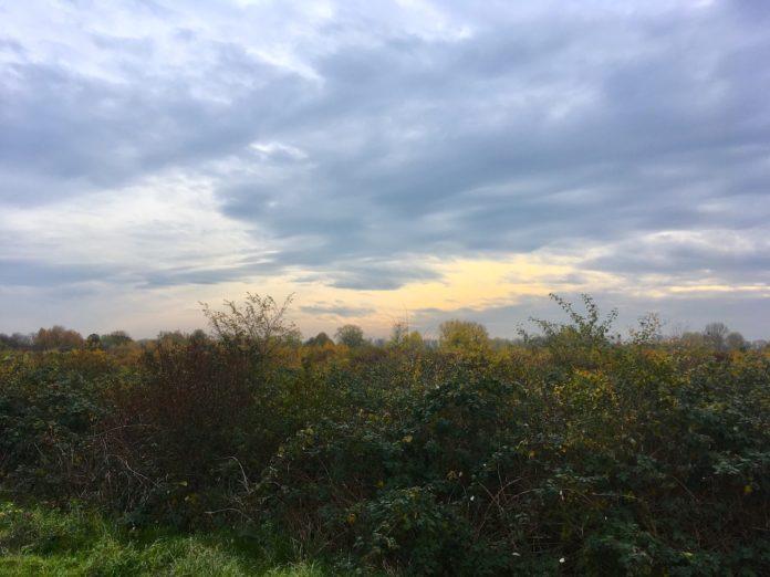 Naturschutzgebiet Sürther Auen 2019