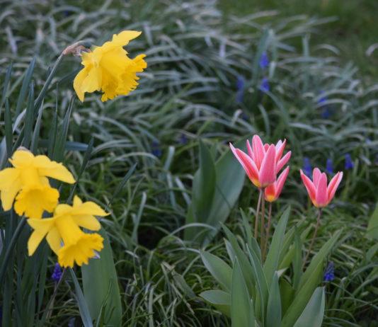 Frühling in Krummhörn