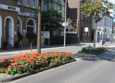 Köln News - Sommerliche Beete Rodenkirchen