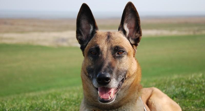 """Polizeihund """"Milow"""" stellt Kabeldieb - Festnahme"""
